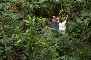 COuple in the rainforest