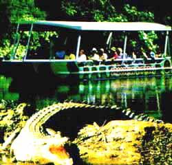 croc cruise